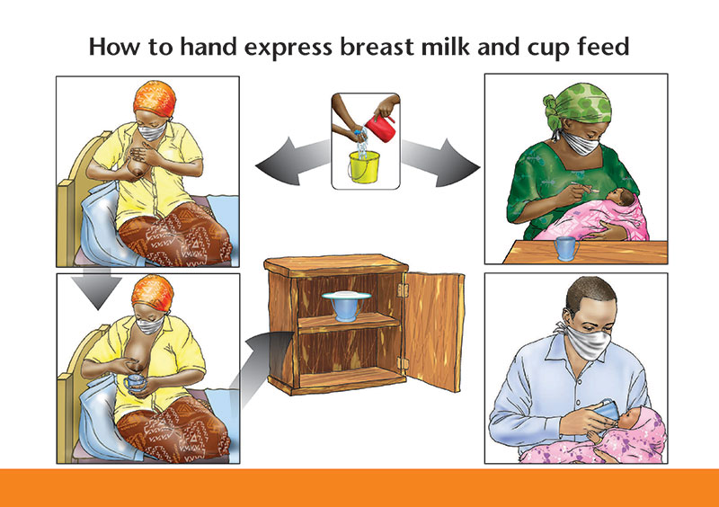 Illustration of How to hand express breast milk and cup feed